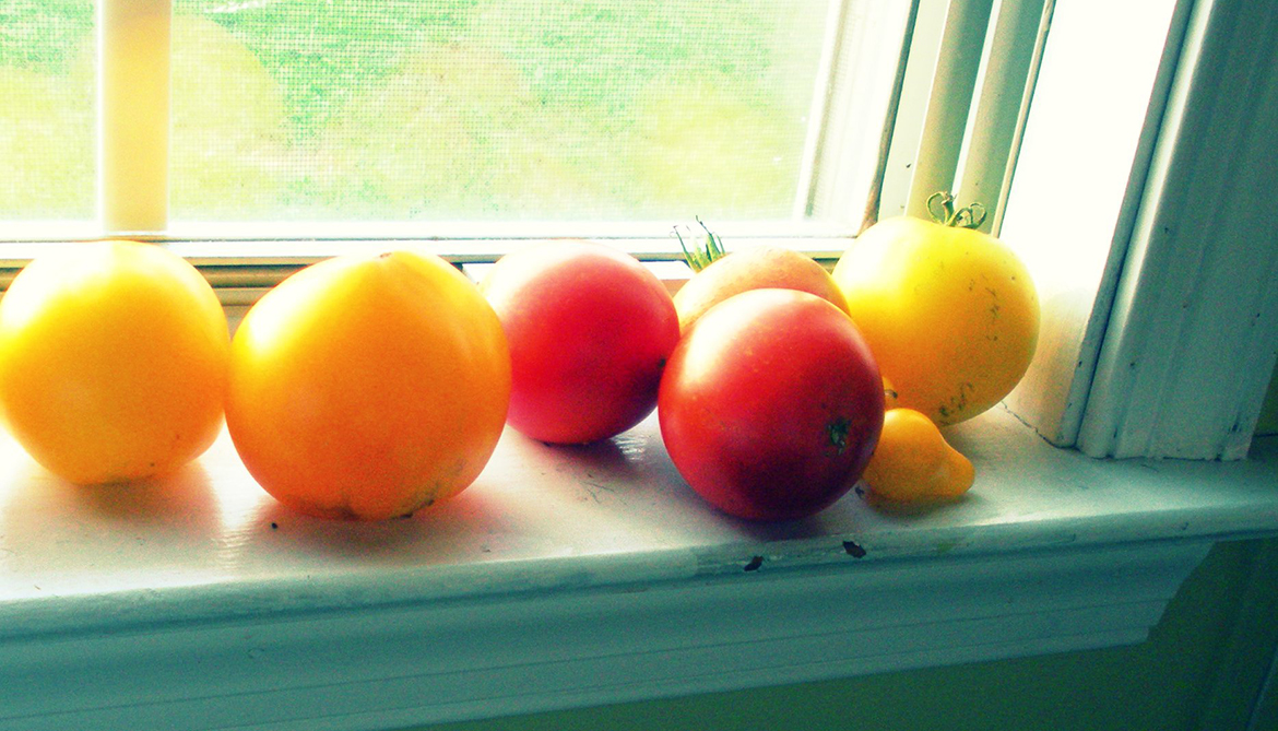 Tomatoes may lower women's breast cancer risk