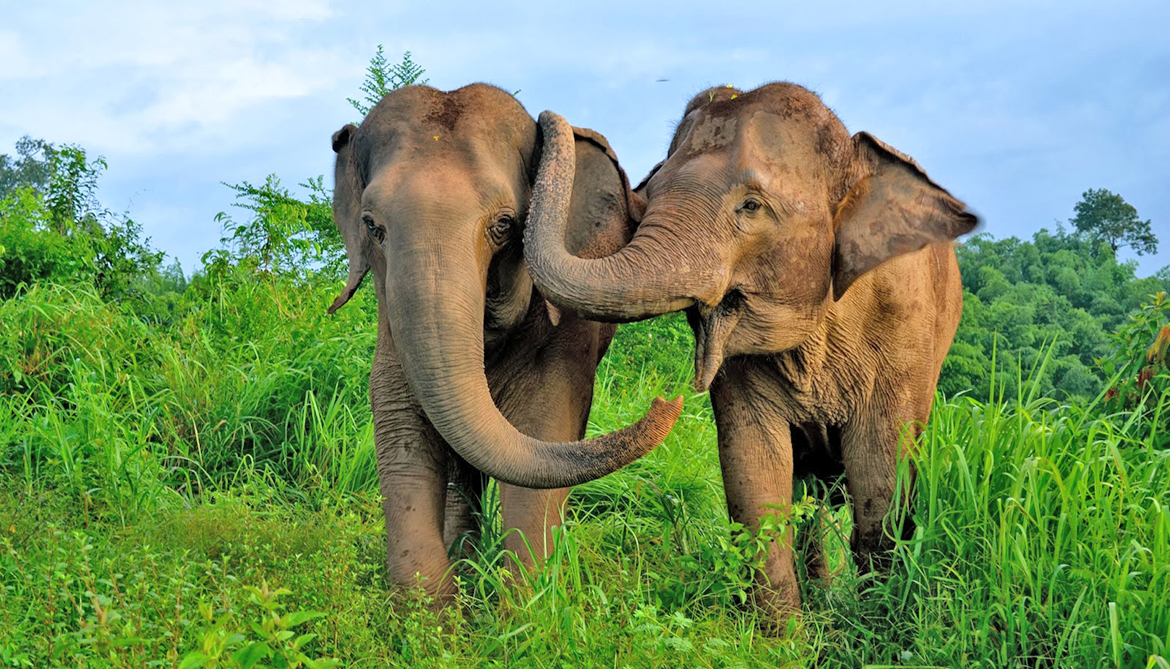 Distressed elephants get 'hugs' from pals