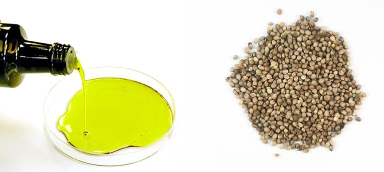 High oleic oil and hemp seeds. (Credit: U. York)