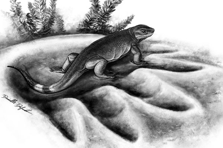 Eocasea standing in the footprint of the largest known herbivore of that time, Cotylorhynchus. (Credit: Danielle Dufault)