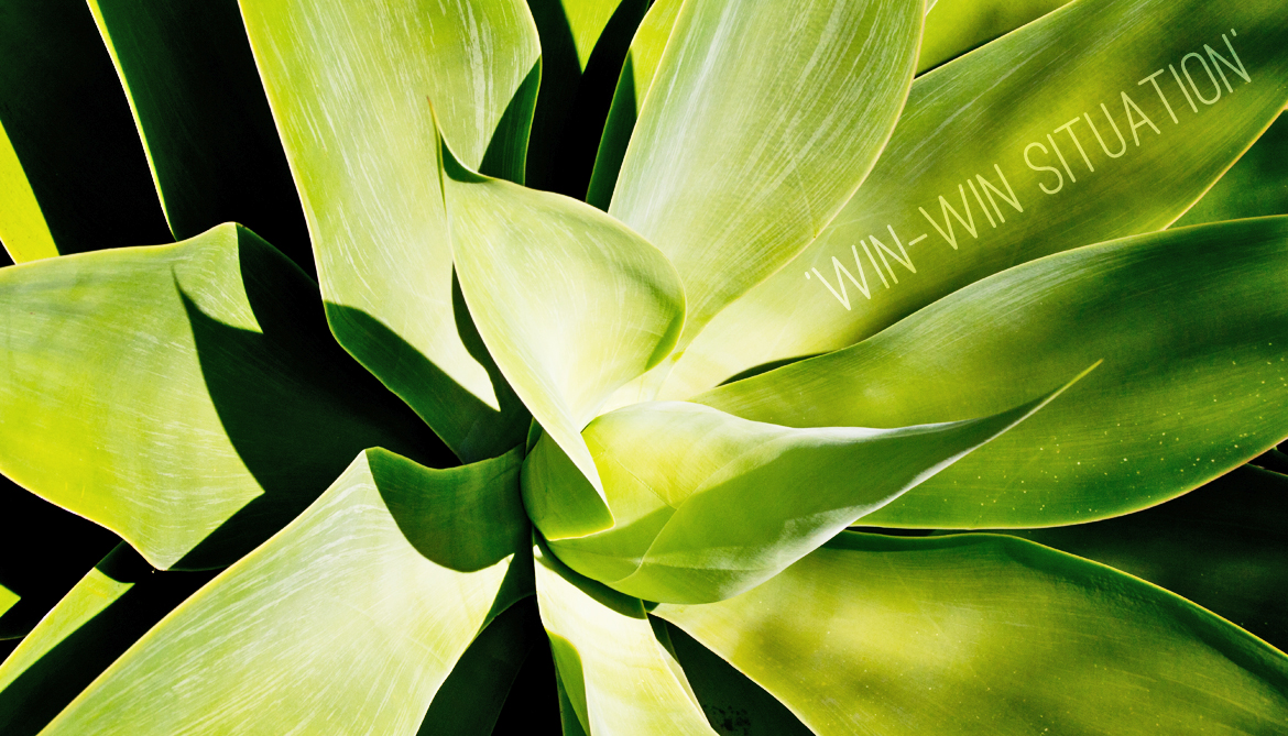 Grow agave for biofuel among solar panels
