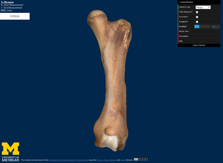 This is how the 3D digital model of a femur (thighbone) from the Buesching mastodon appears on the new website. (Credit: courtesy of the University of Michigan Museum of Paleontology)