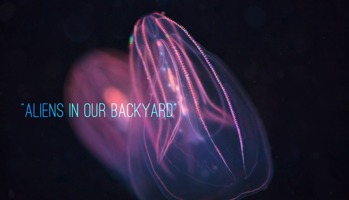 Comb jellies have evolved totally different brains