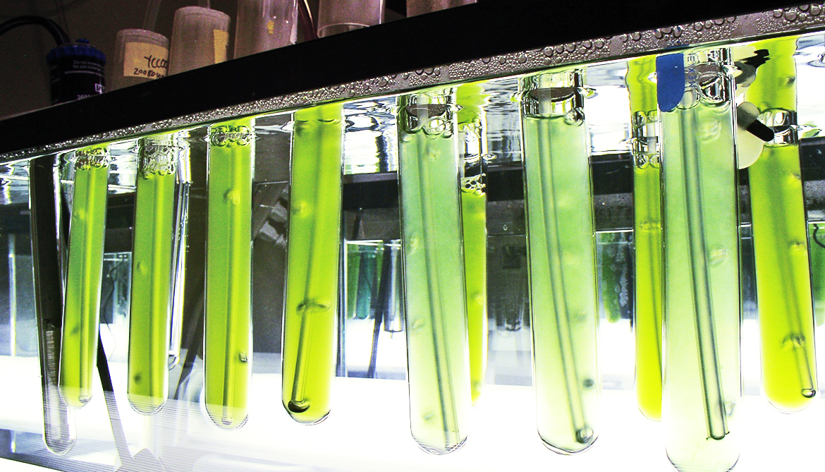 Tiny algae 'compartments' might speed up photosynthesis