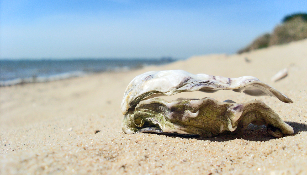 Will climate change squeeze out clams and oysters?