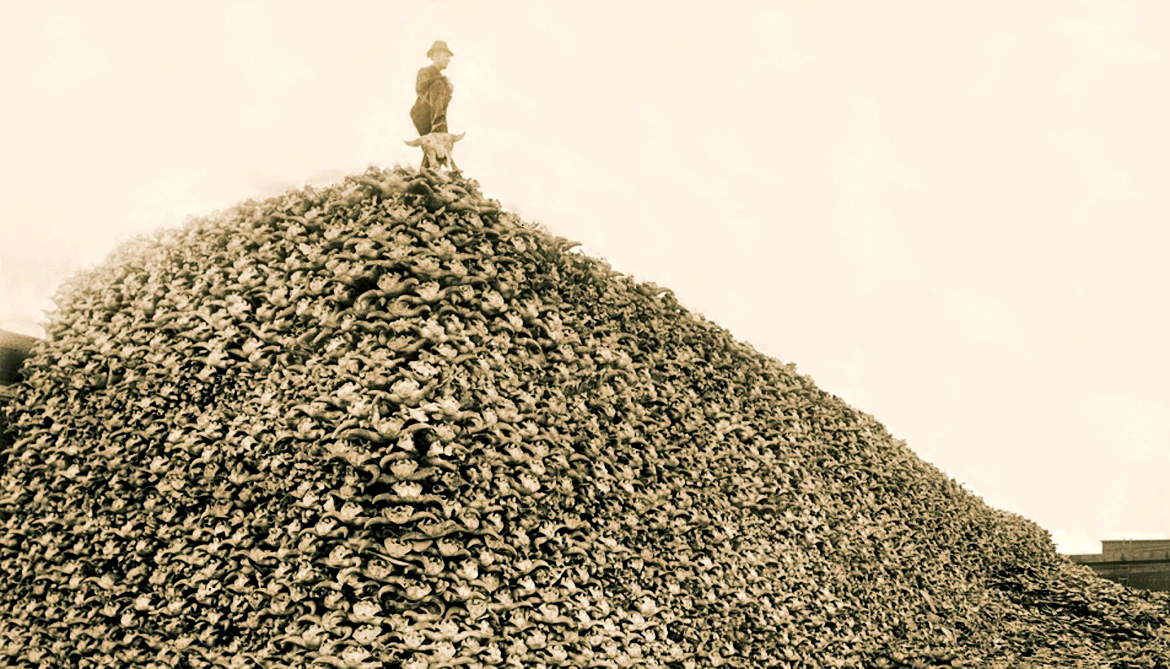 man stands on pile of bison skulls