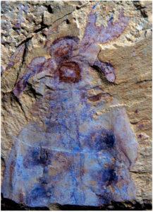 Lyrarapax fossil