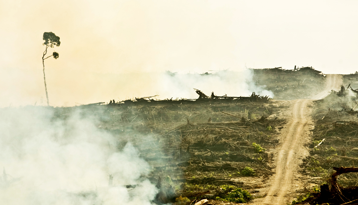 Palm oil production makes streams hotter and murky