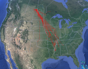 map showing Mallard duck migration
