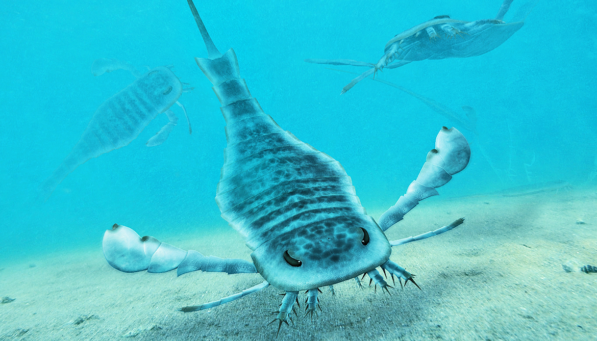 Giant sea scorpion was likely a lame predator