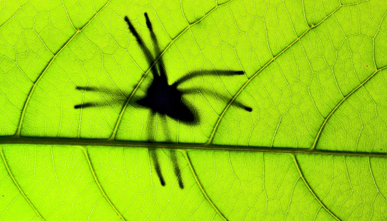 Spider venom mix-up could make insecticides safer