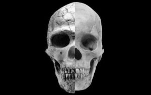 composite skull