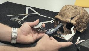 scientist measures a skull