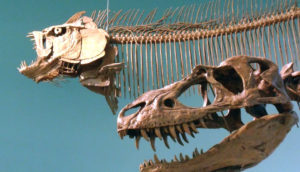Cretaceous fish and dinosaur skeletons