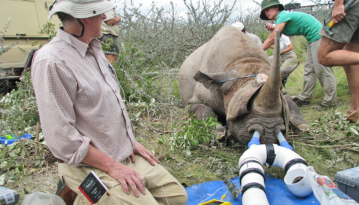 veterinarians attend to a captured rhino