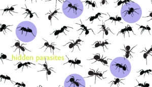 ant silhouettes