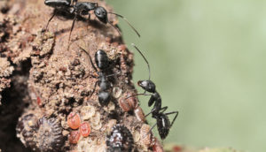 healthy ants