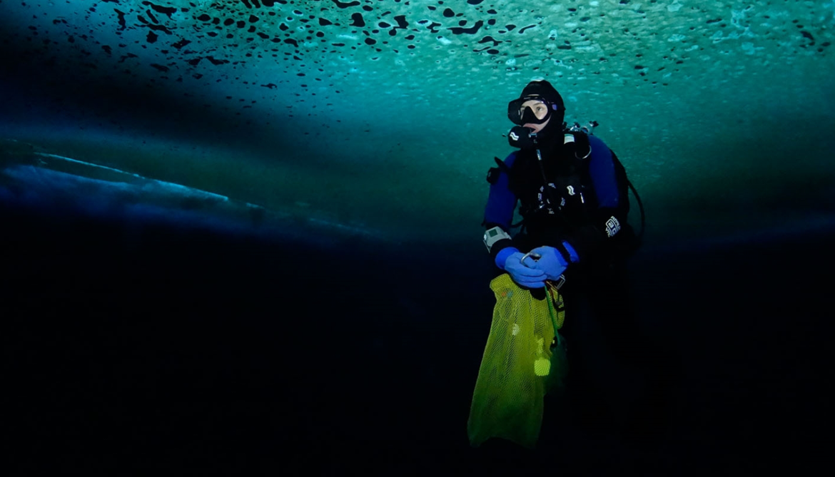 diver in the Antarctic