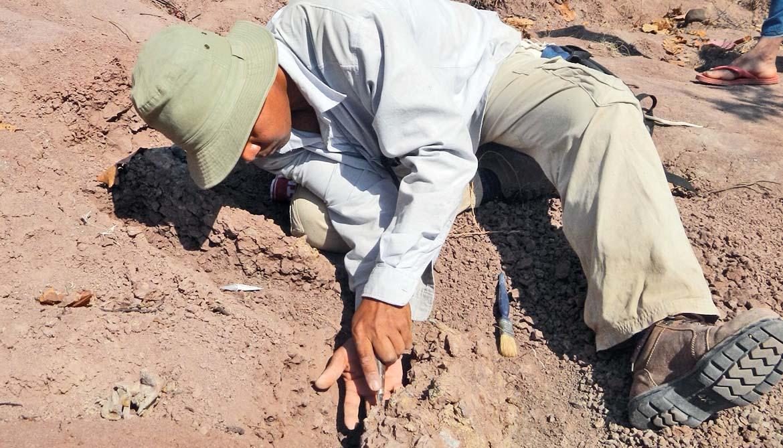 Mana Rugbumrung examines an excavated skull in Myanmar