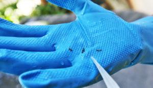 """""""municipalities mobilize against dengue"""""""
