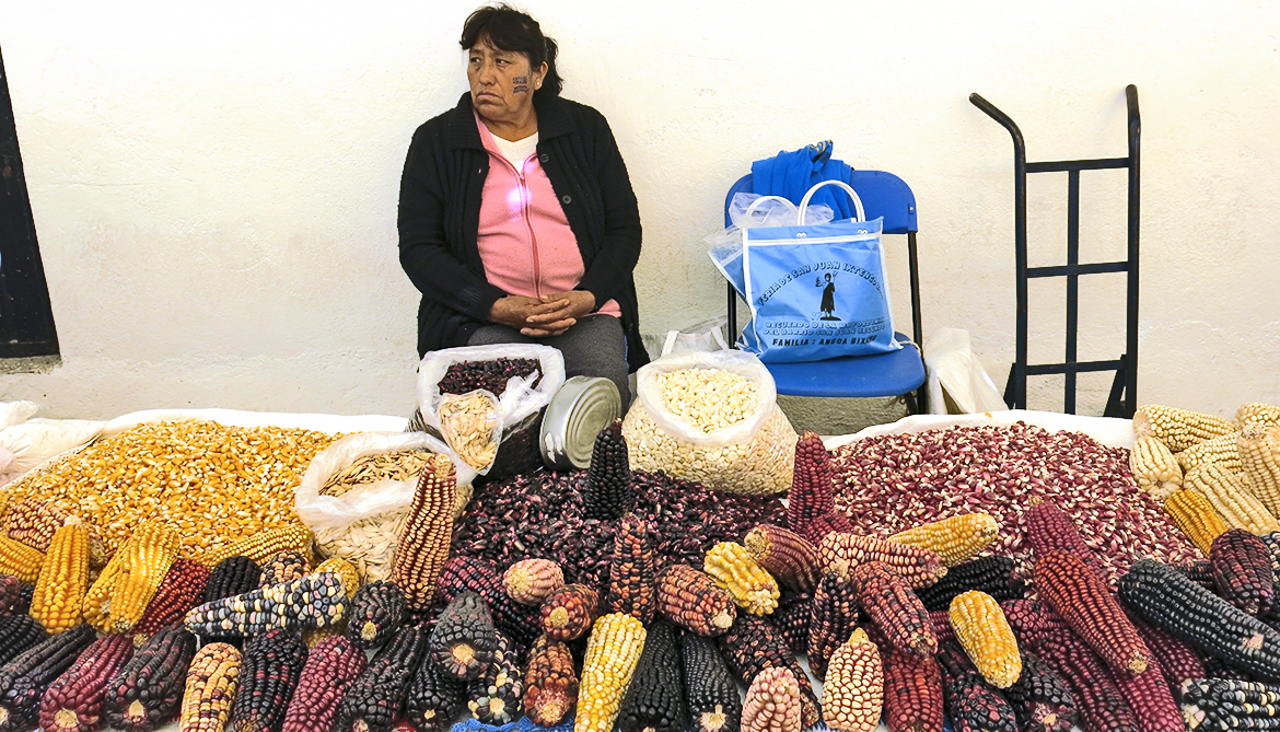 Genetic diversity of Mexico's corn crops is 'eroding'