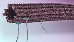 microtubules on a nanoscale assembly line