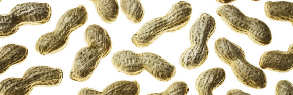 peanuts isolated on white