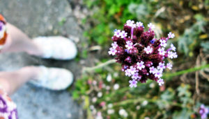 feet next to a flowering plant