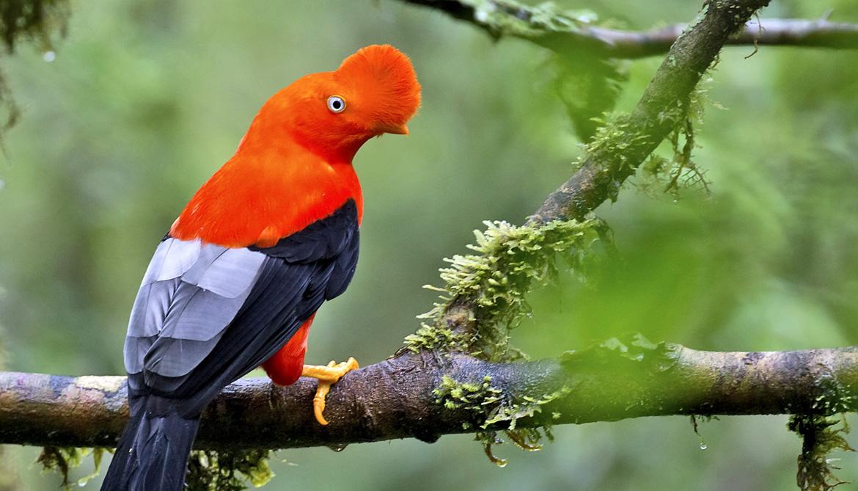 How 60 of the weirdest birds are related - Futurity
