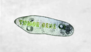 generic amoeba