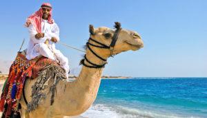 man riding a camel on the beach