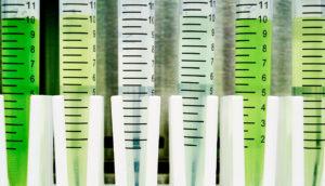 test tubes of cyanobacteria
