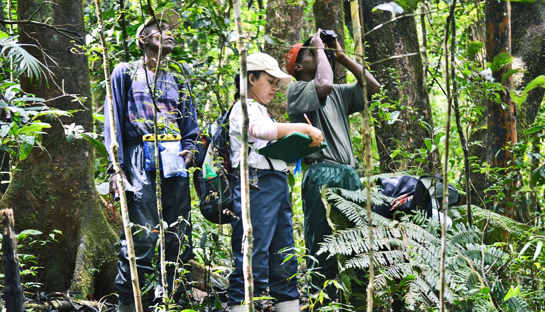 lemur researchers