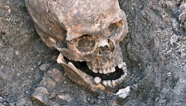 skull in grave