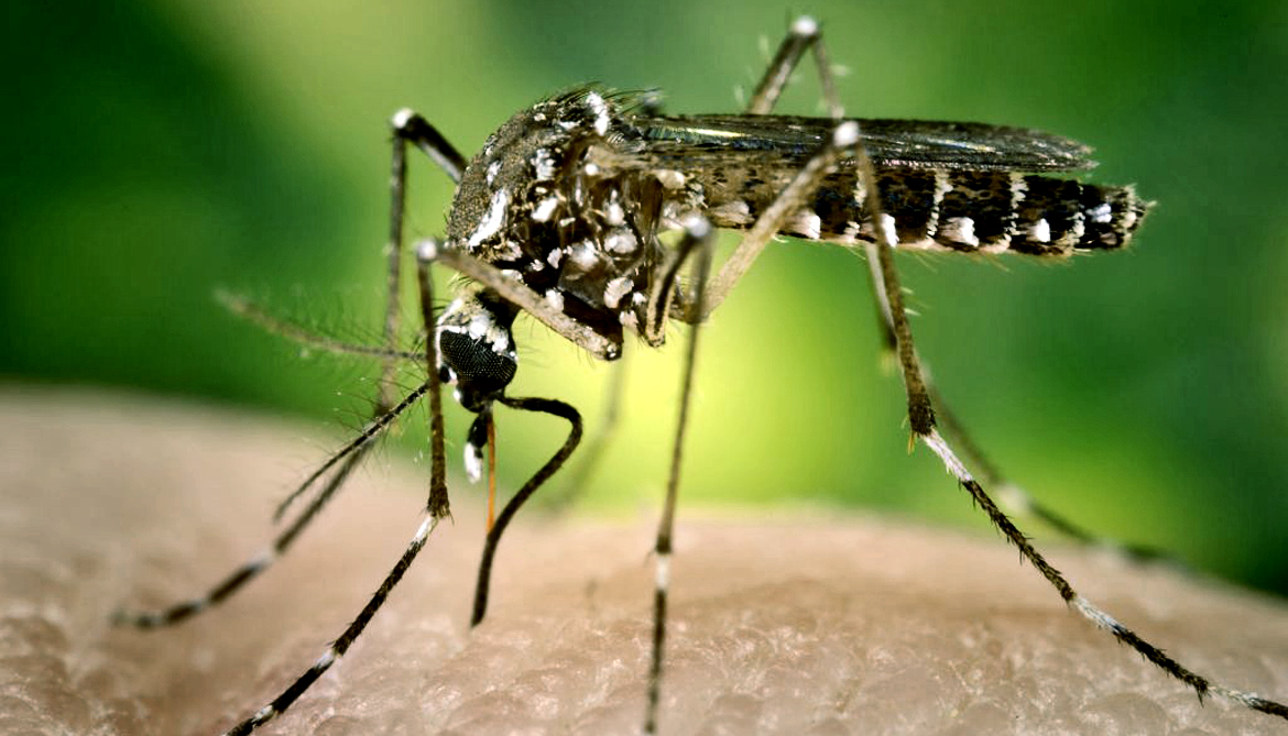 New antibodies could boost dengue vaccines