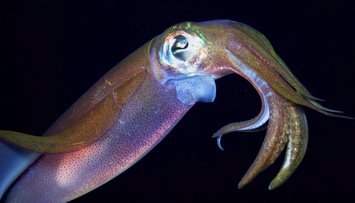 Squid teeth are basis for 3D-printing plastic