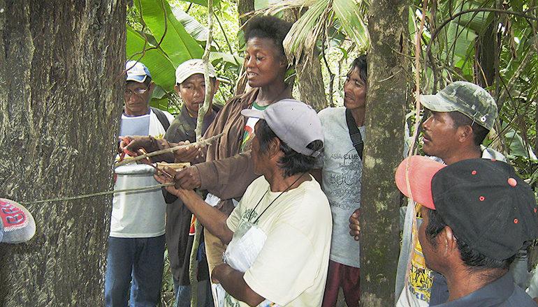 The late Kye Epps teaches Wapichana field researchers how to measure tree diameter