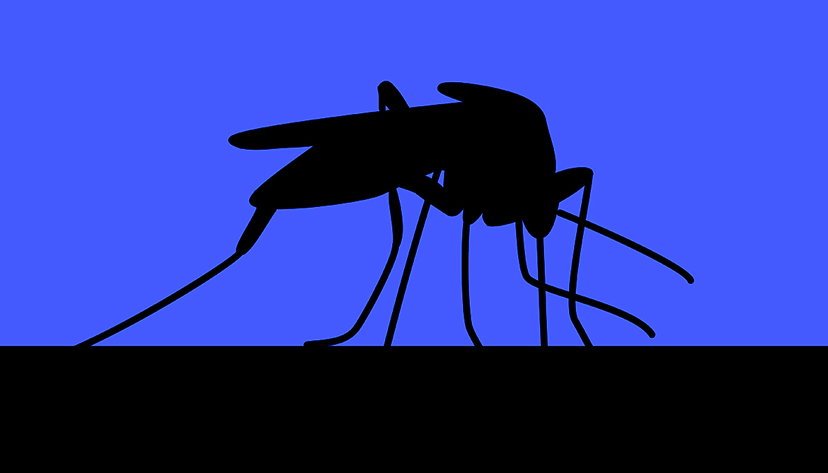 Bed nets can't stop new 'super mosquito'