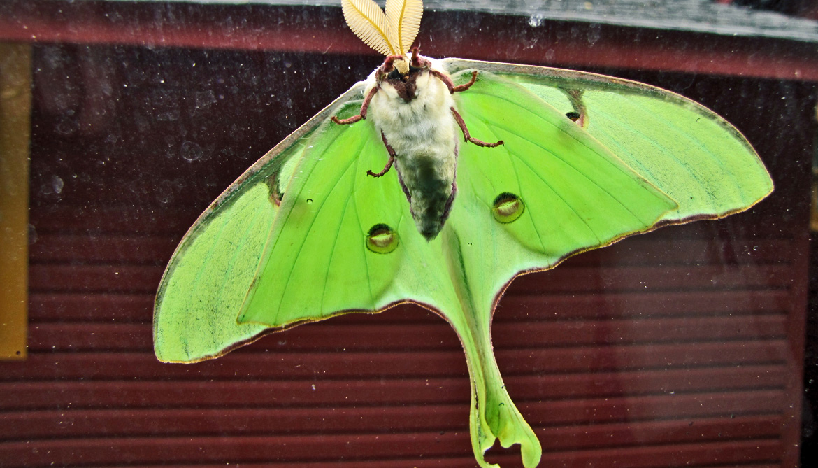Moths evade enemy sonar with a flick of the tail