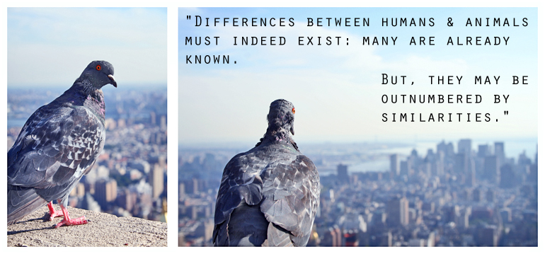 pigeon quote