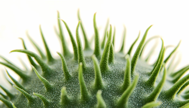 Engineered antibodies grab on to HIV 'spikes'