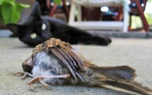 outdoor cat killed bird