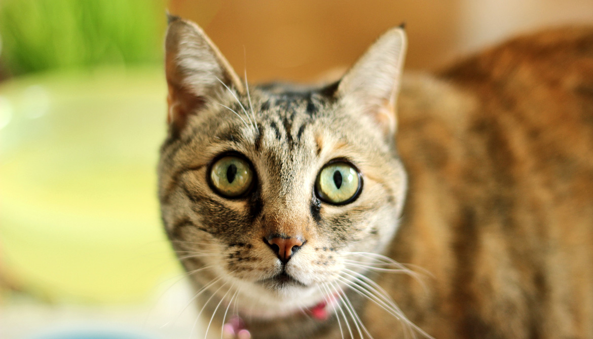 Cats suggest drug may treat 'childhood Alzheimer's'