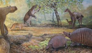 ancient South American mammals