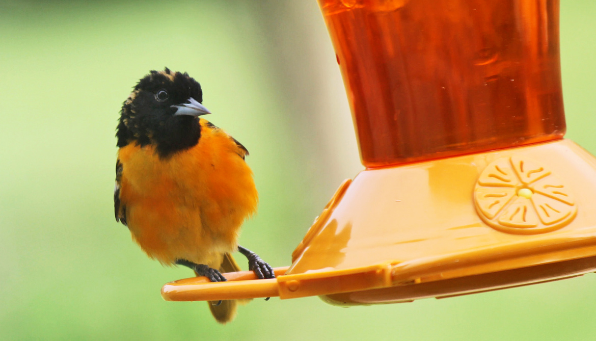 What birds in the suburbs need from people