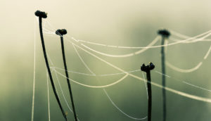 spider web looks like dendritic spines