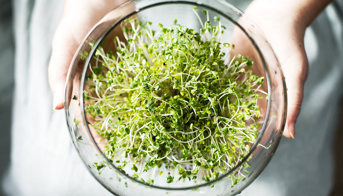 Broccoli sprout extract may prevent mouth cancer