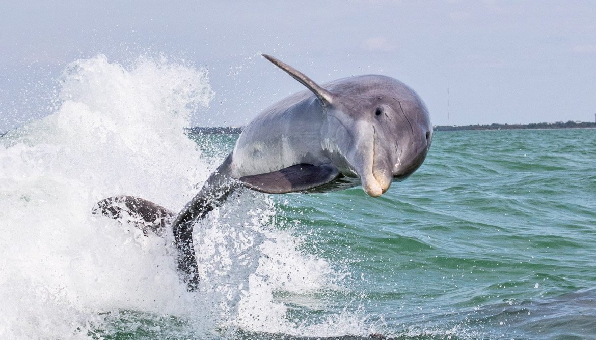 Dolphins more at risk of extinction than clams