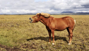 horse whinnies in field