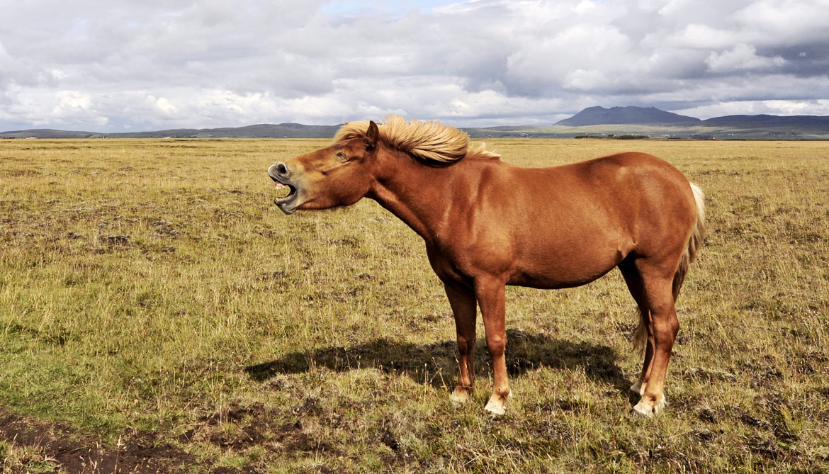 How horse whinnies convey their emotions